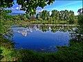 """Naturschutzgebiet """"Hälfti"""", Büren a.d. Aare, Switzerland - panoramio.jpg"""