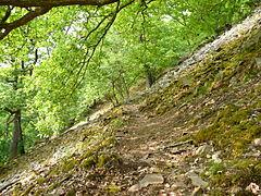 Naturschutzgebiet Hünselburg Edersee Urwaldsteig Blocksteinhalde 3.JPG