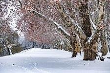 Neckarinsel-mit-Schnee-1.jpg