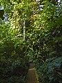 Neuer Botanischer Garten - Tropenhaus 002.jpg