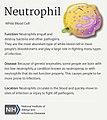 Neutrophil (30104264763).jpg
