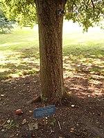 Reputed descendants of Newton's apple tree, at the Botanic Gardens in Cambridge and the Instituto Balseiro library garden