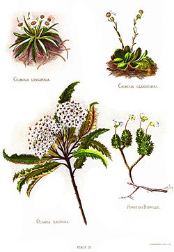 Nfnz d139 group of four plants.jpg