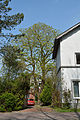 Niedersachsen, Hemmoor, Naturdenkmal NIK 2611.JPG
