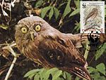 Ninox philippensis centralis 2004 stamp+card of the Philippines 2.jpg