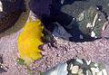 Nudibranch in california tidepools 7.jpg