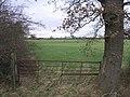 Oak Gate Post - geograph.org.uk - 317035.jpg