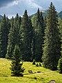 Obernberger See - Landschaft -BT- 01.jpg