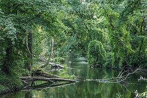 Obra (river) - Obra near Skwierzyna.