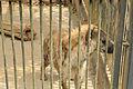 Omiya park zoo 005.jpg