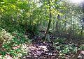 On a blue trail - dry creek - panoramio.jpg