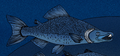 Oncorhynchus rastrosus cropped.png