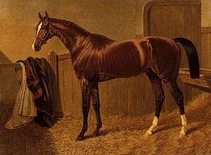 Orlando (horse) - Image: Orlando )GB)