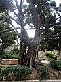 Ortigia - panoramio (1).jpg