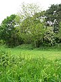 Overgrown railway embankment - geograph.org.uk - 1319355.jpg