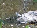 Pássaro pescador.jpg
