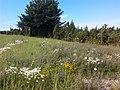 Põld Tammikult Saariste poole,Kõruse k. 2012-07-31 11.08.06 - panoramio.jpg