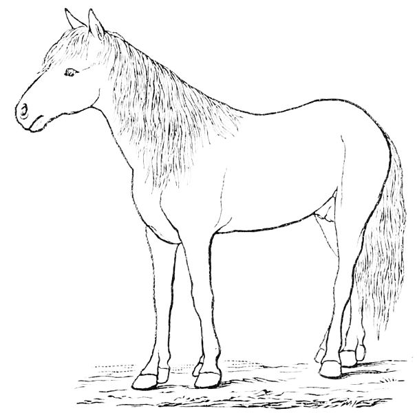 Image Result For Arabian Horse Coloring
