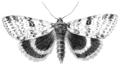 PSM V53 D683 Catocala moth in flight.png
