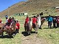 Pachancho Llama Race.jpg