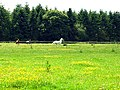 Paddock on farmland near Ashampstead - geograph.org.uk - 18554.jpg