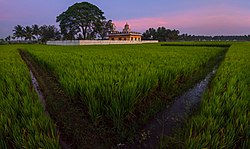 Paddy fields overseeing a temple