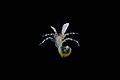 Paguridae (MNHN-IU-2010-4874).jpeg