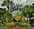 Palmtrees are always fabulous. - Les palmiers nous émerveillent toujours... - panoramio.jpg