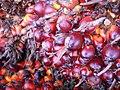 Pam oil seed.jpg