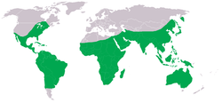 Distribution of Pantala flavescens