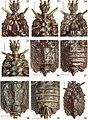 Paralibiocoris roundangulus (10.3897-zookeys.789.26165) Figures 22–30.jpg