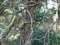 Parcours d'Orientation Patrimoine du Hameau de Ternier @ Saint-Julien-en-Genevois (51069868523).jpg