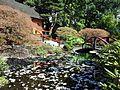 Park and Tilford - Japanese garden spring.jpg
