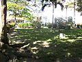 Parque Bolívar La Dorada-iguana2.JPG