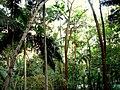 Parque Trianon - panoramio.jpg