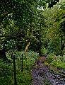 Path along The Goit - geograph.org.uk - 954569.jpg