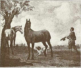 The Stadhouder's Horses