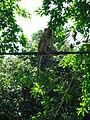 Penang Botanic Gardens (10).JPG