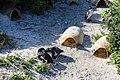 Penguins at Boulders Beach, Cape Town (2).jpg