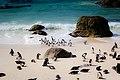 Penguins at Boulders Beach (Unsplash).jpg