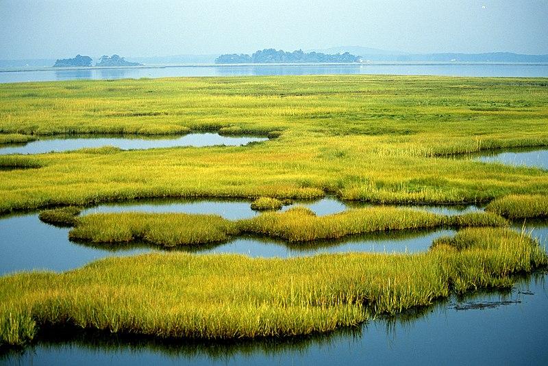 File:Photo of the Week - Coastal Wetlands (MA) (8070749192).jpg