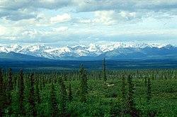 White Spruce taiga, Denali Highway, Alaska Range, Alaska