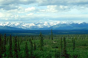 Denali Highway - White Spruce taiga along the Denali Highway, with the Alaska Mountain Range in the Background