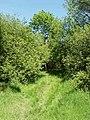 Piddington Wood nature reserve, The Woodland Trust - geograph.org.uk - 180259.jpg