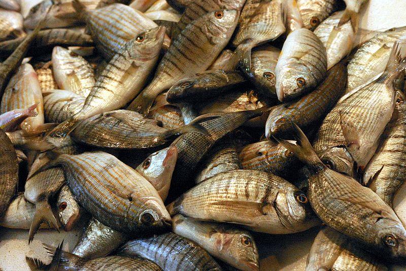 עכו - שוק דגים