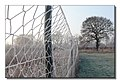 Plantation Fence - geograph.org.uk - 639880.jpg