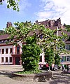 Platane und Schloss Heidelberg.jpg