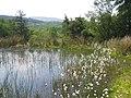 Pond in peat bog below Llys y Gwynt, Dolwyddelan - geograph.org.uk - 1278314.jpg