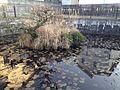 Pond of Chikushi Shrine.JPG