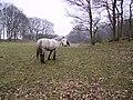 Ponies Seatle - geograph.org.uk - 116361.jpg